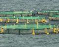 Şanlıurfa'da balık üretim çiftliği kuruldu