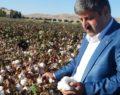 Şanlıurfa'da pamuk çiftçisi zor günler yaşıyor