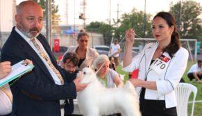 Farklı ırklarda 205 köpek katıldı