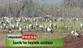 İznik'te leylek istilası