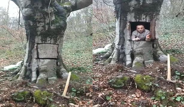 Koronadan korunmak için ağacın içine saklandı