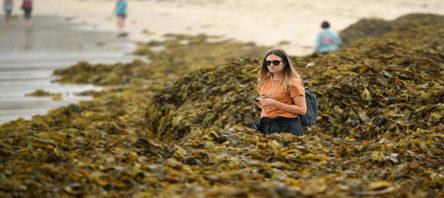 Avustralya'da yeni felaket: Deniz yosunları