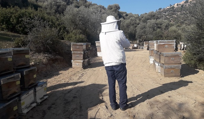 İlginç sabotaj arıları telef etti
