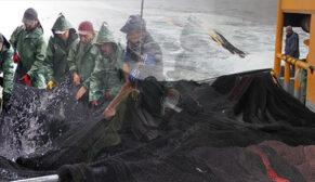 Balıkçının zorlu av mesaisi
