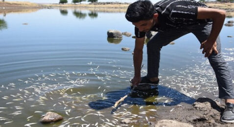 Şanlıurfa'da yaşanan toplu balık ölümleri korkutuyor