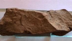 Siverek'te 10 milyon yılık balık fosili bulundu