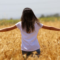 Buğday hasadı başladı