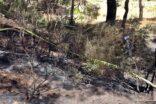 Ormanlık alanda yanmış ceset bulundu