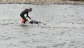Kayıp olarak aranan kişinin cesedi nehirde bulundu
