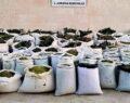 2 ton 628 kilo esrar ile 826 bin kök kenevir ele geçirildi