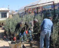 Şanlıurfa'da fidan satışları iki kat arttı
