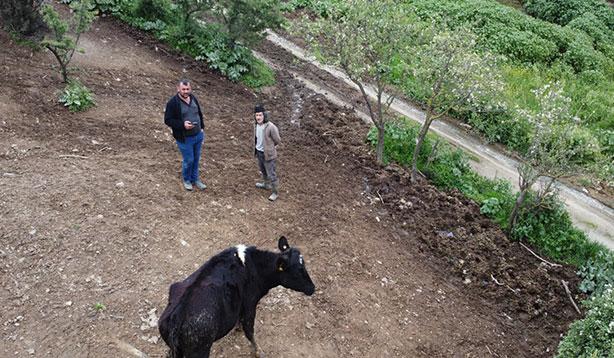 Kaybolan hayvanı drone ile buldular