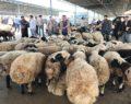 Siverek hayvan pazarı virüs yüzünden kapatıldı