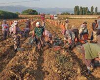 Tarım işçileri virüse ve sıcağa rağmen mesaide