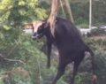 Dereye düşen inek vinçle kurtarıldı