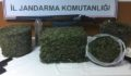 Jandarma uyuşturucuyu arı kovanının içinde buldu