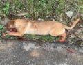 Sokak köpeğine kurşun yağdırdı