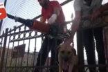 Sıkışan köpeği itfaiye kurtardı