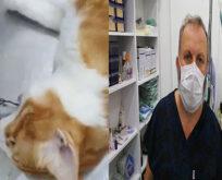 İki metrelik naylon ip yutan kediye endoskopi yapıldı