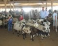 Kurban Bayramı'na saatler kala hayvan pazarında yoğunluk başladı