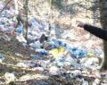 Ormanlara atılan çöpler doğal hayatı tehdit ediyor