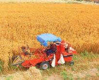 Şanlıurfalı çiftçiler için yeni alternatif ürün geliştirildi