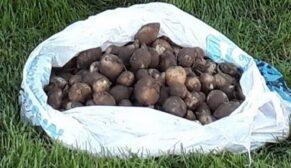 Salep soğanı toplayan 3 kişiye ceza