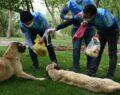 Şanlıurfa'da sokak hayvanlarını beslemek için özel izin aldılar