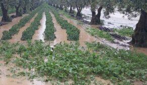 Binlerce tarla sular altında kaldı