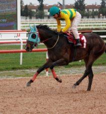 Mersin Barosu Koşusu'nu 'Altın Kop' kazandı
