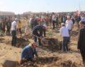 Şanlıurfa'da 287 bin fidan toprakla buluştu