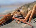 Van Gölü Havzası'nda  büyük tehlike