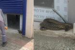 Sıcaklarla birlikte yılanlar ortaya çıkmaya başladı