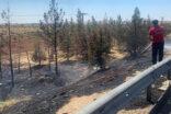 Ağaç yangını