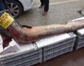 Irmakta yakalanan balık görenleri şoke etti