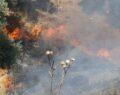 Çıkan yangında zeytinlik alan zarar gördü