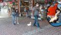 Ördekleriyle çarşı pazar geziyorlar