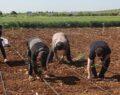 1 Mayıs'ta tarım işçileri ekonomiye katkı sunmaya devam ettiler