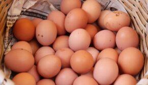 Yumurta fiyatlarındaki yükseliş devam ediyor