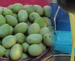 Zeytinyağı fiyatları yükselecek