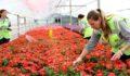 Emekçi kadınlar Eskişehir'e renk katıyor