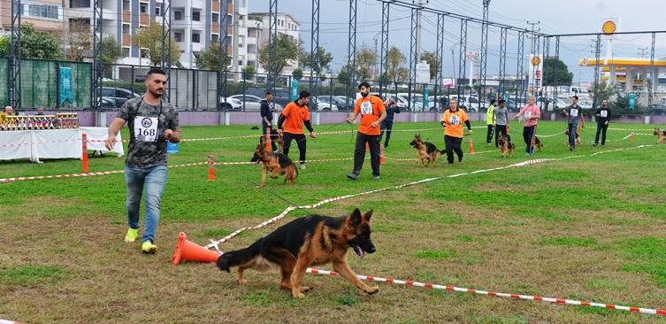 130 Alman çoban köpeği, sokak hayvanları için yarıştı