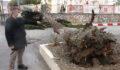 Fırtınaya dayanamayan ağaç devrildi
