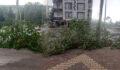 Rüzgar ağacı devirdi