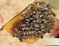 Arıların soktuğu talihsiz adam hayatını kaybetti