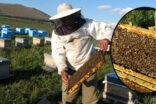 Arıcıların kuraklık endişesi