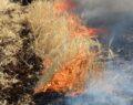 Siverek'te 400 dönüm ekili arazi kül oldu