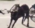 Yükü çekmeyen atı böyle kırbaçladı