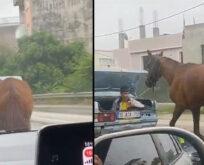 Araca bağladığı atı kilometrelerce koşturdu