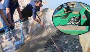 Şanlıurfa'dan Türkiye'ye yıllık 20 bin ton alabalık